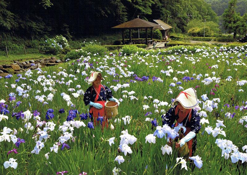 せせらぎ公園の花摘み娘