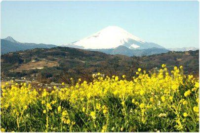 吾妻山公園からの富士山