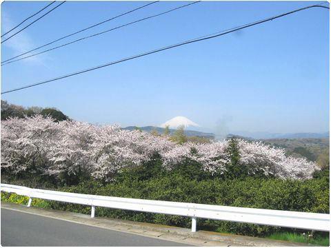 富士見八景 その4 桜美園の上