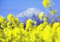 【佳作・冬】吾妻山の早春
