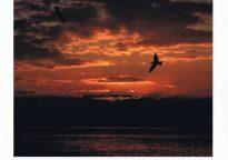 【入選・冬】日出の空に飛ぶ