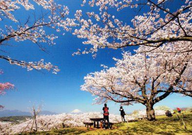第23回 推薦「春うらら」石井 清一