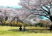 第22回にのみや観光フォトコンテスト 【準特選】「桜日和」玉置 正(二宮町)