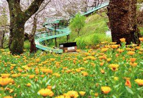 第23回 【準特選】 「春の吾妻山」 樋口 文二郎 (座間市)