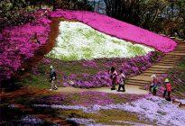 第22回にのみや観光フォトコンテスト 【入選】「春ときめいて」本間 浩一(小田原市)