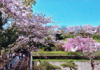 第23回 【入選】「ようこそ吾妻山へ」樋口 文二郎(座間市)