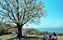 第23回 【入選】「賑わう吾妻山公園」加藤 一郎(小田原市)