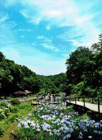 第22回にのみや観光フォトコンテスト 【入選】「初夏のせせらぎ公園」加藤 一郎(小田原市)