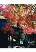 【入選・秋】深紅に染まる