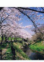 【入選・春】春爛漫
