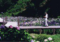 特選 「四季の彩り(夏)」 室井義雄