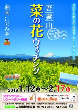 菜の花2019-ポスター